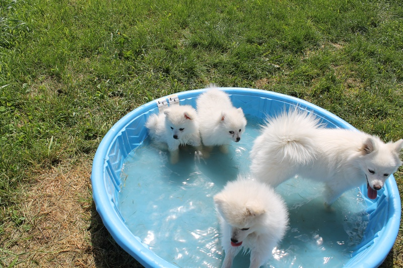 ESKIE PUPS COOLING DOWN